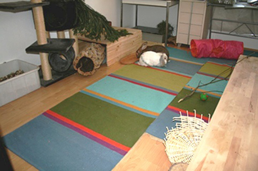 innenhaltung von kaninchen wohnungshaltung von kaninchen. Black Bedroom Furniture Sets. Home Design Ideas